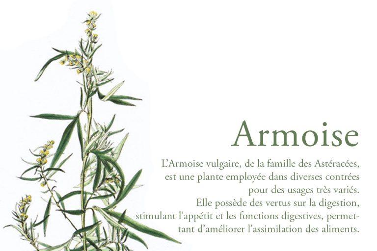 LDP_Armoise_1440x960